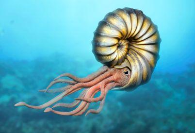 ammonite-creature